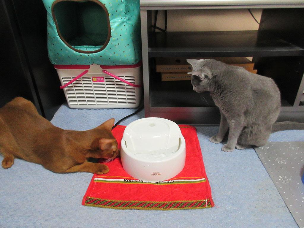 興味津々の猫たち。