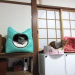 特製猫ベットとロシ子。
