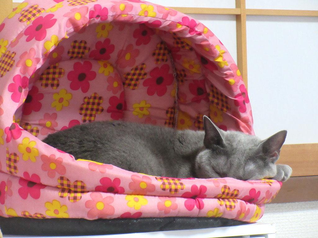 ロシ子の寝姿のアップ写真。