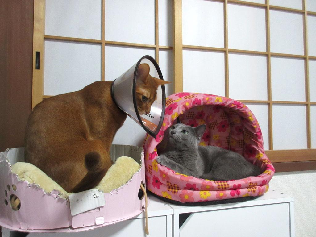 面白い我が家の猫たち。
