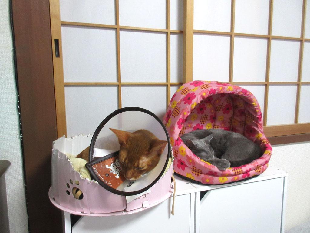 すっかり家族な我が家の猫たち。
