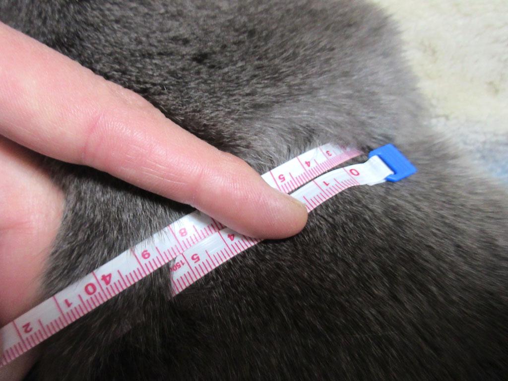 ロシ子の第9肋骨周りは33cm。