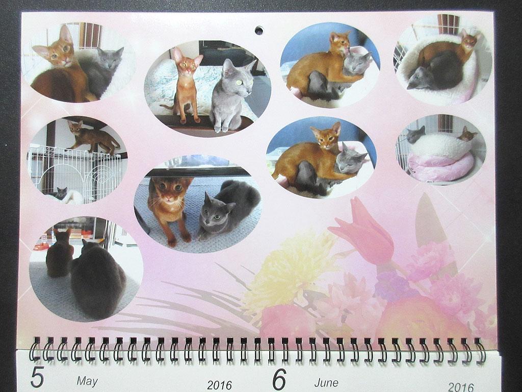 ロシ子とアビのすけのカレンダー、5月・6月。