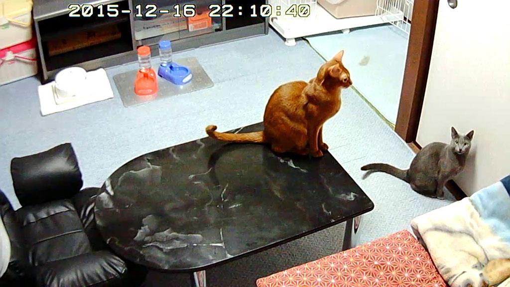 ご飯待ちの猫たち。