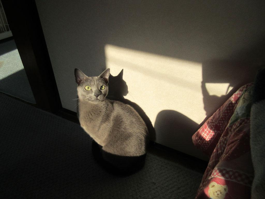 朝陽の中のロシ子ちゃん。