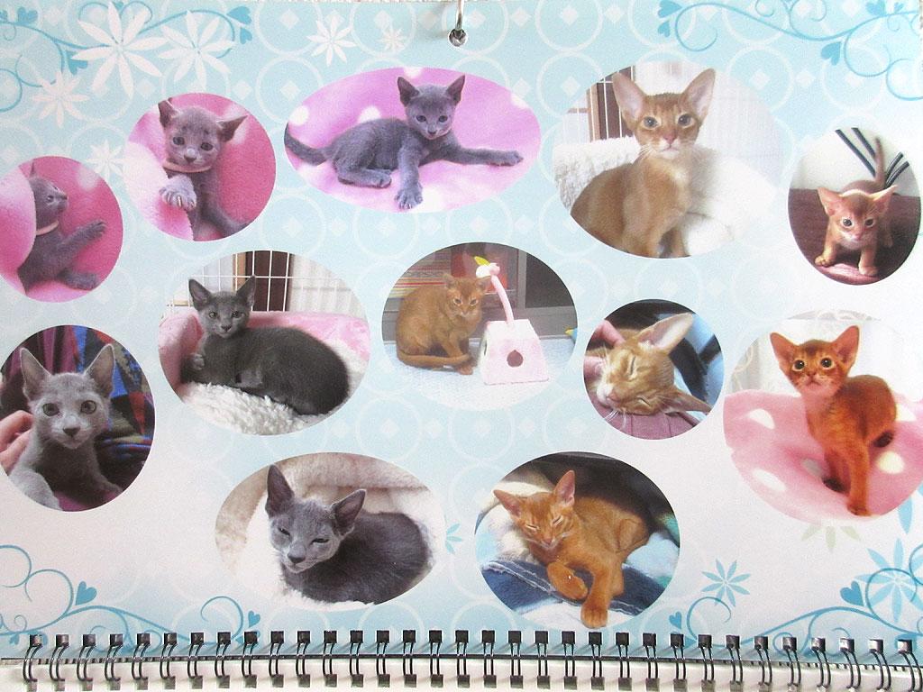 我が家の猫たちの写真のカレンダー。