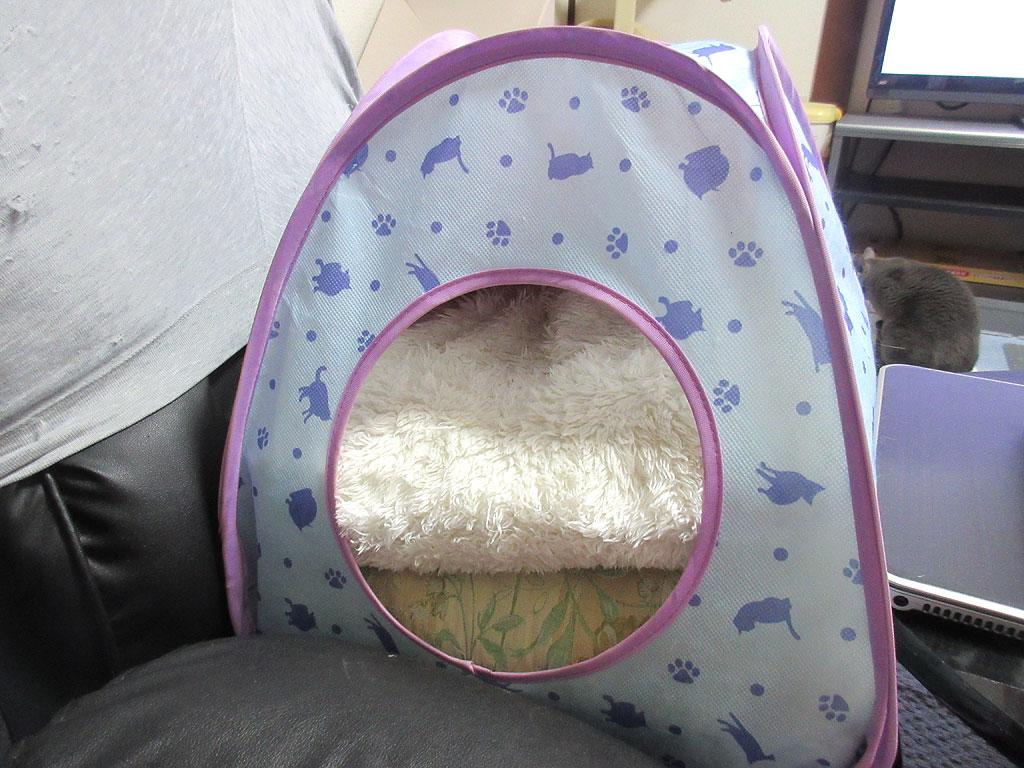 ロシ子の特製猫ベット第二弾。