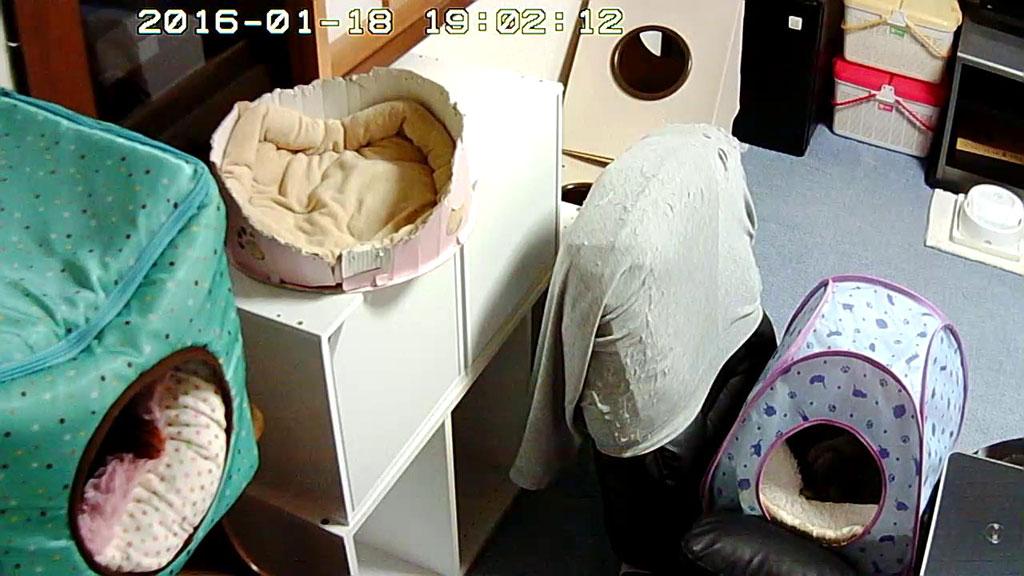 定位置で寝る我が家の猫たち。