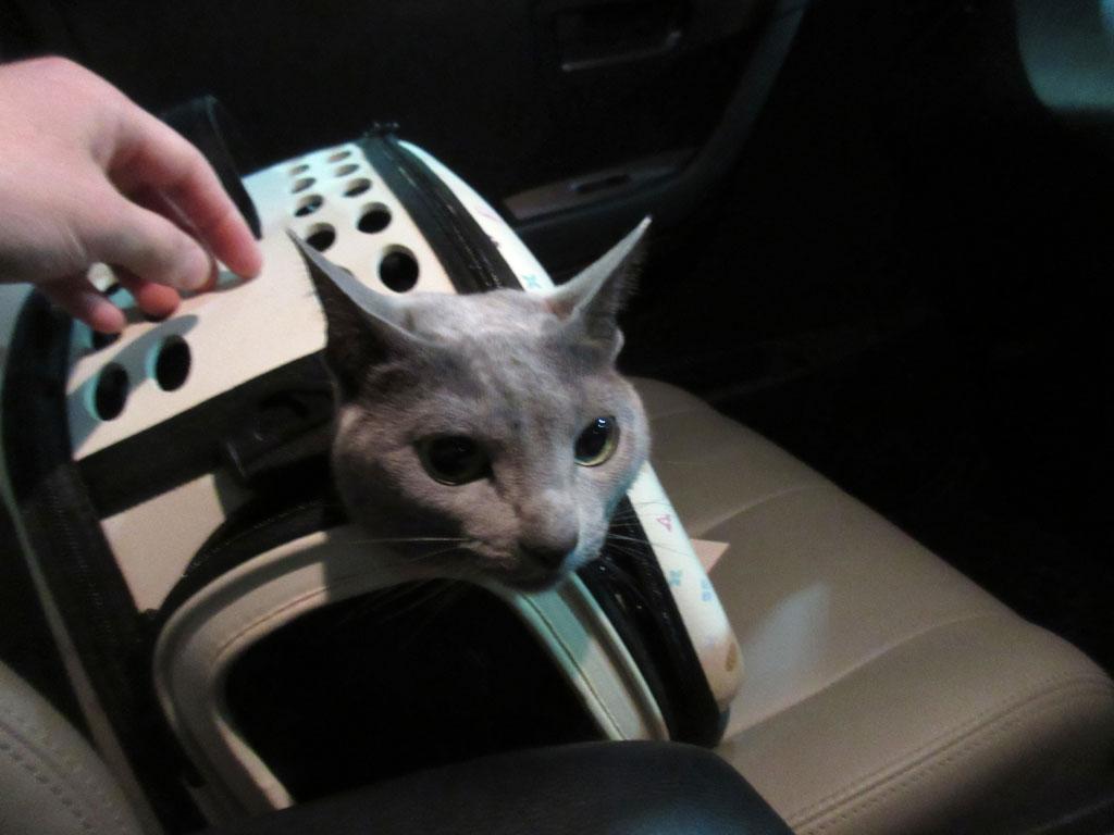 帰りの車中のロシ子ちゃん。