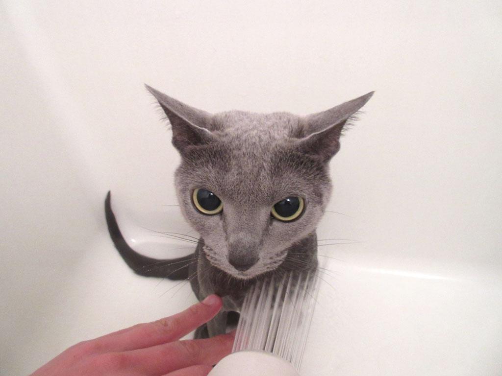シャワーされるロシ子ちゃん。