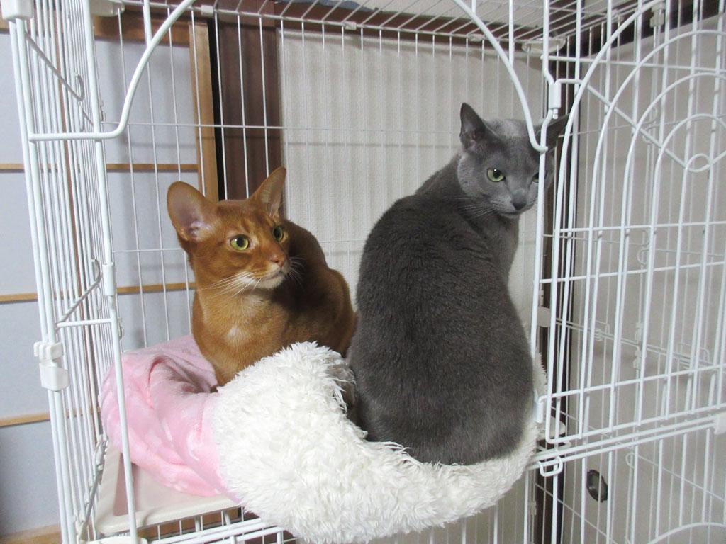 仲良しそうに見える猫たち。