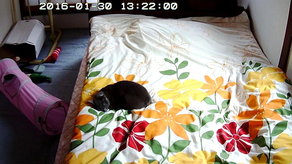寂しそうに寝ていたロシ子。