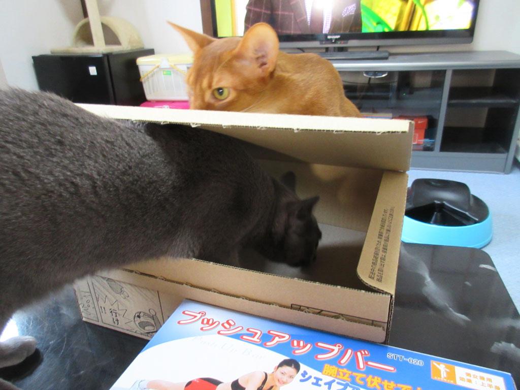 ロシ子が箱の中に潜る。