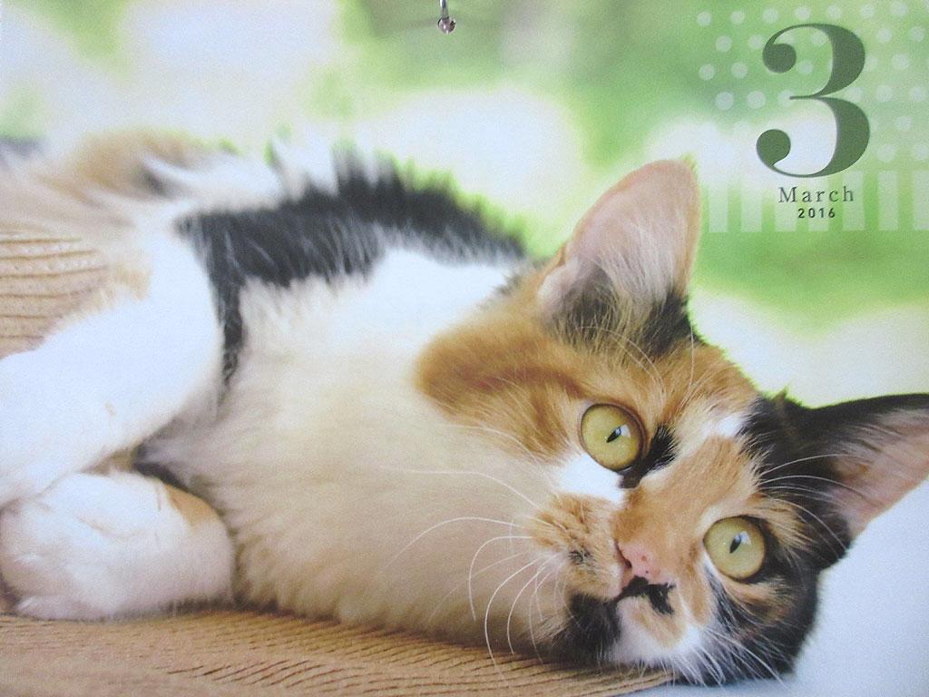 雑誌、猫のきもちのカレンダー。