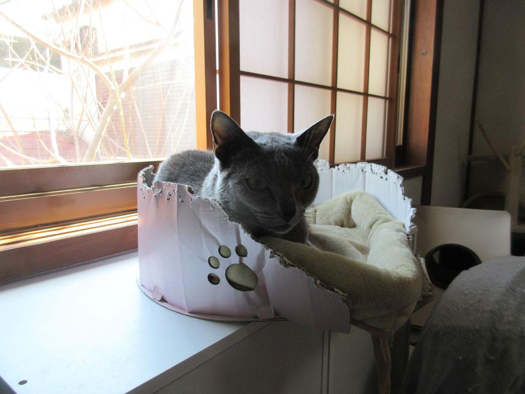 ボロボロの猫ベット。