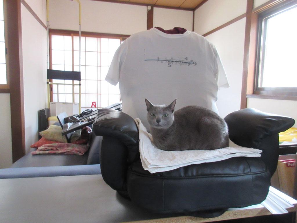 回転座椅子の上のロシ子。