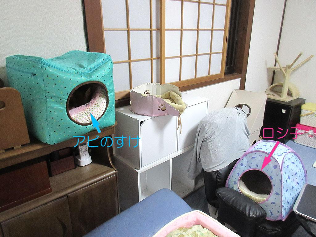 ロシ子とアビのすけの各々の寝場所。