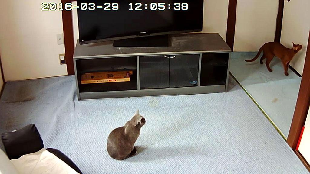 猫たちがウロウロ。