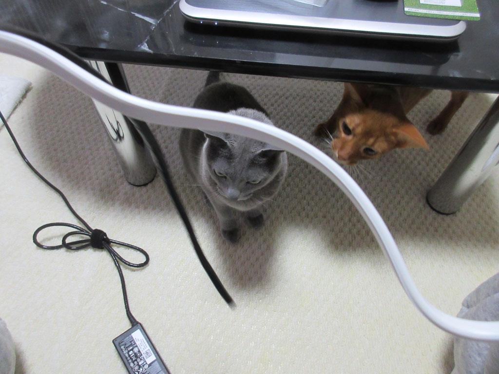 コードカバーに群がる猫たち。