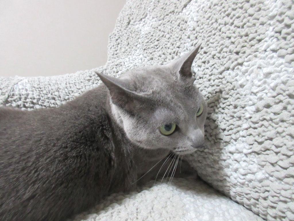 ソファーに手を突っ込むロシ子。