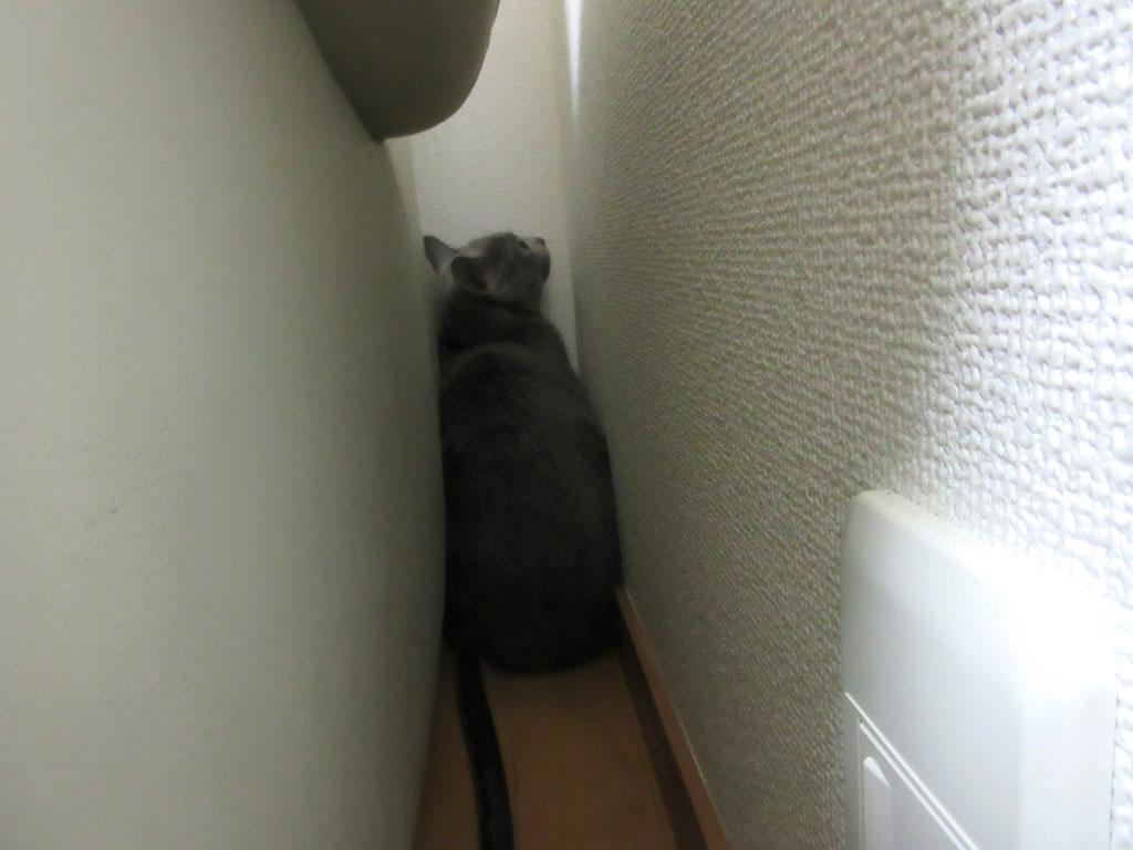 部屋の隅に隠れてしまったロシ子。