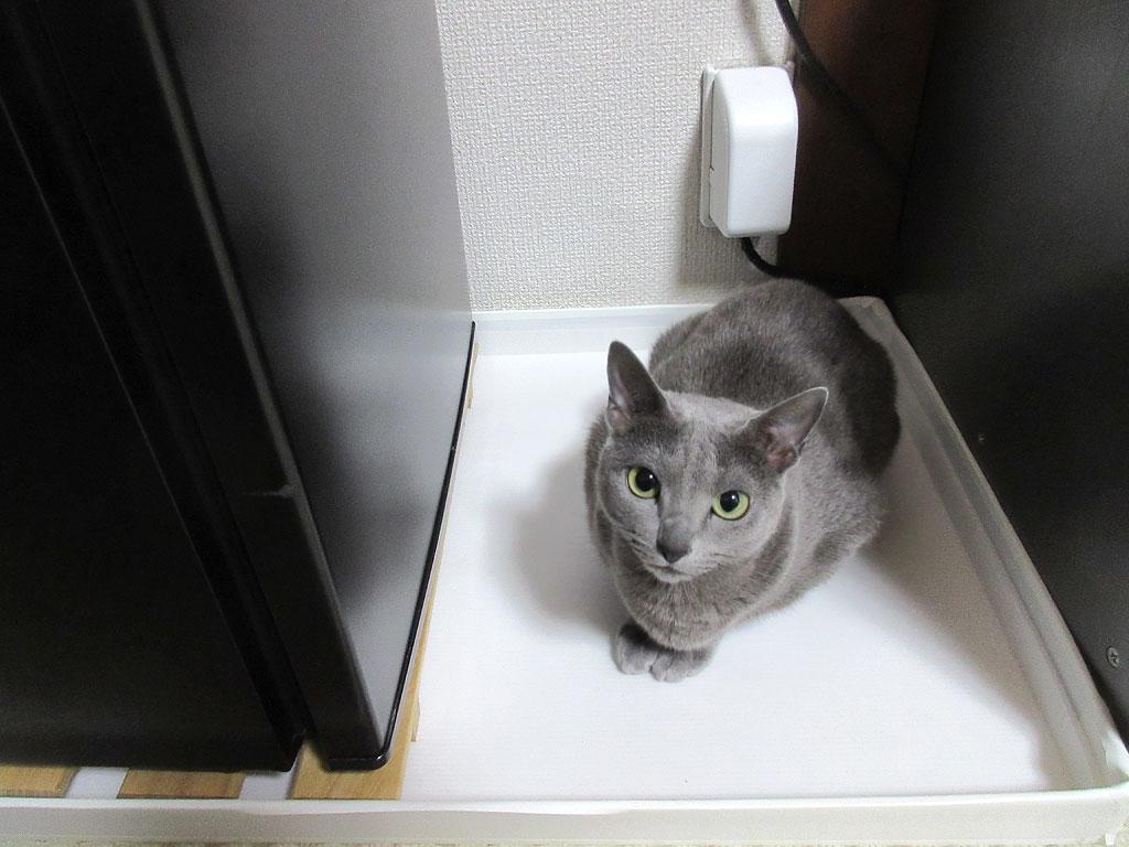 冷蔵庫対策もしなければ。