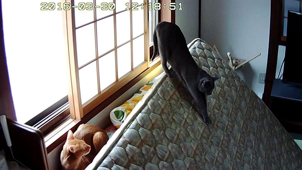 お昼時の猫たち。