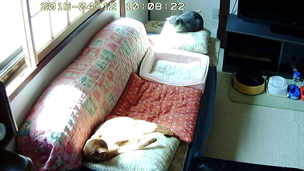 離陸する前の我が家の猫たち。