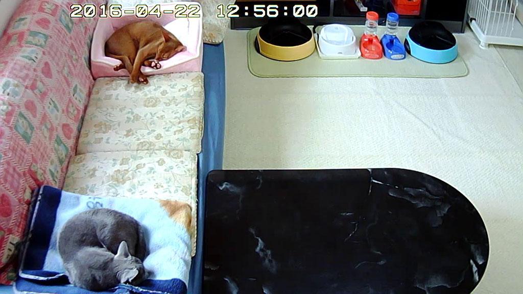 気持ち良く寝ている我が家の猫たち。