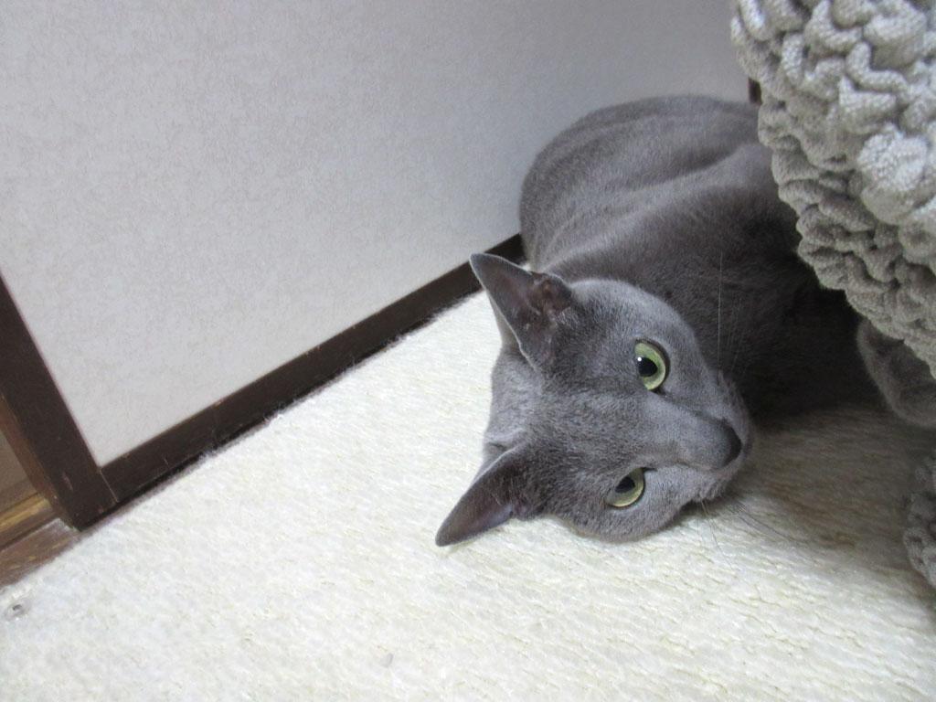 適度な距離感が猫は良い。