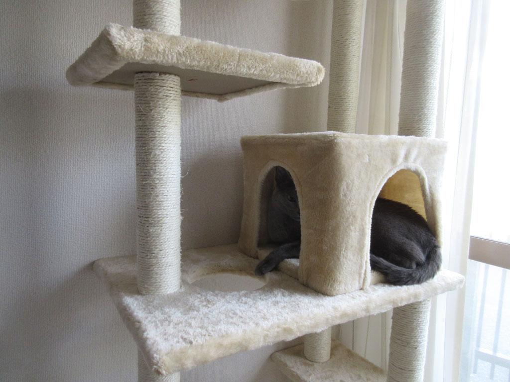 狭い所が好きな猫。