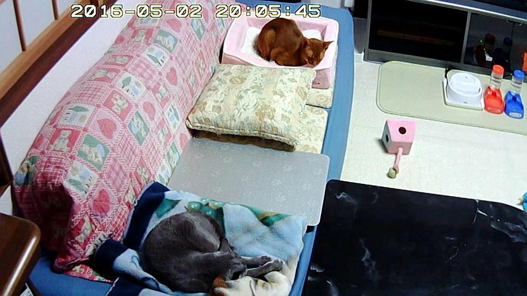 2階で寝ている我が家の猫たち。