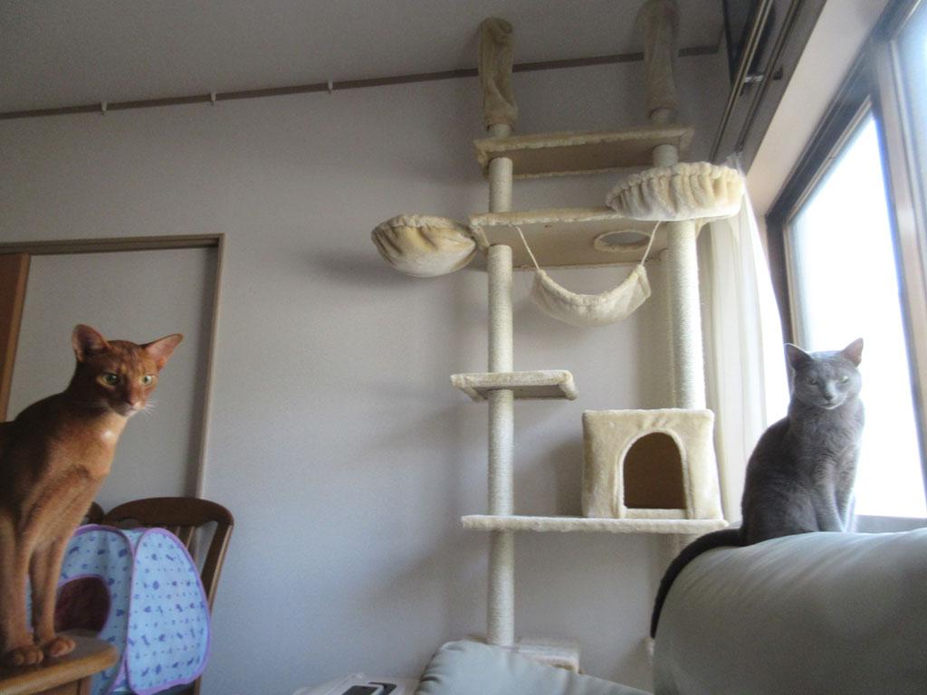 フォーリンタイプの猫たち。