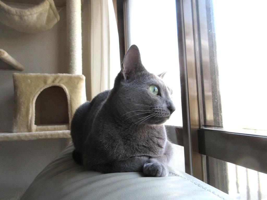外を眺めるロシ子ちゃん。