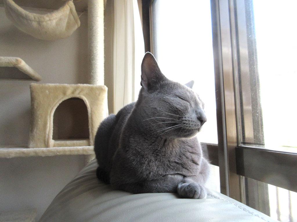 居眠りをしているロシ子ちゃん。