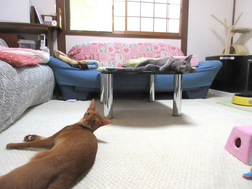 ぐたっとしている我が家の猫たち。