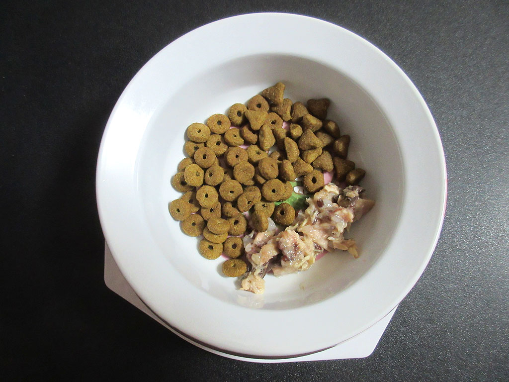 3種盛りのロシ子の朝ご飯。