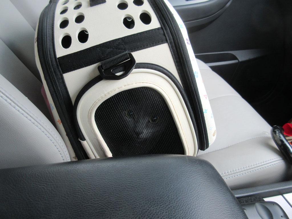 帰りしの車の中のロシ子ちゃん。