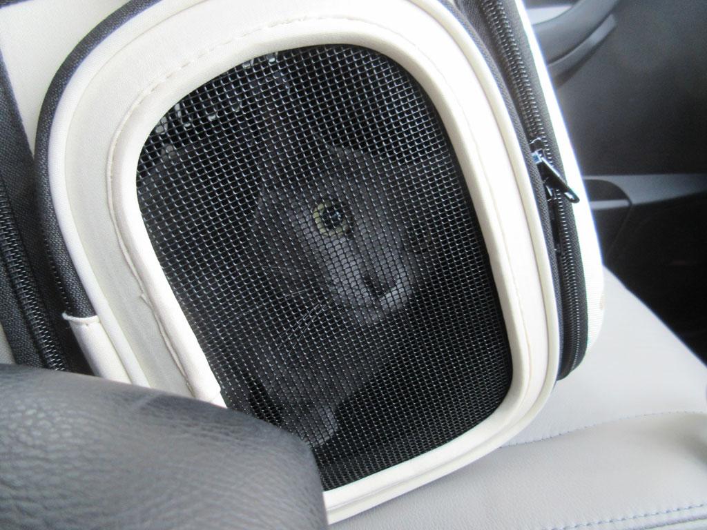 行きしの車の中のロシ子。