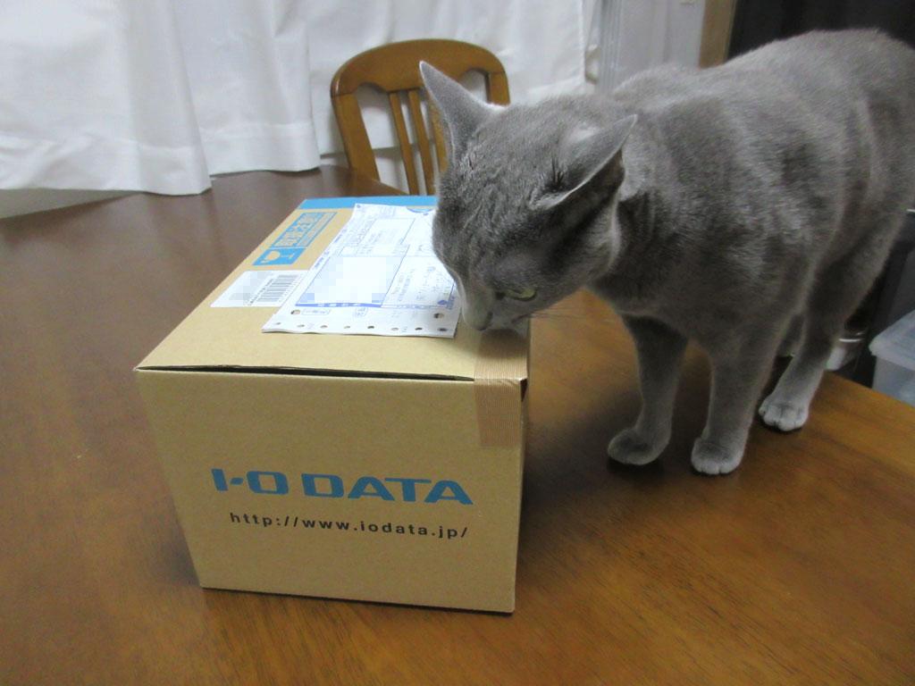 ロシ子も好奇心旺盛な猫。
