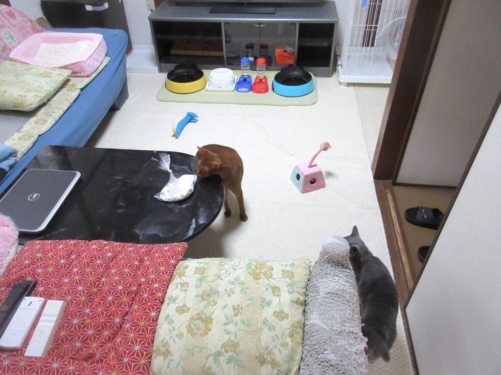 掃除が終わった後の部屋。