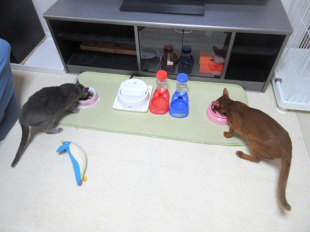 今朝の猫たちの朝ご飯の風景。