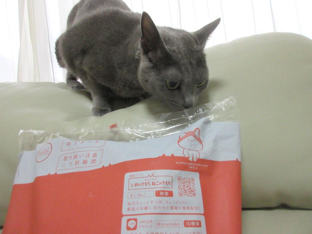 ロシ子も猫ちゃんです。