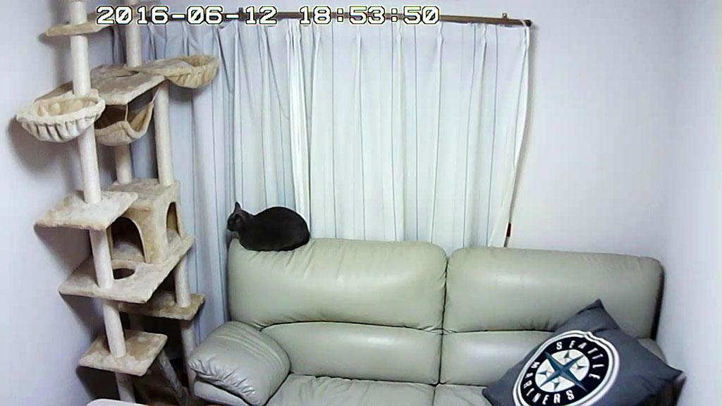 Webカメラを設置した晩のロシ子。