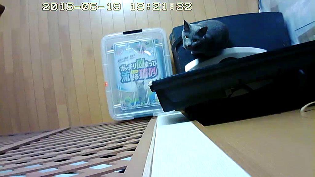 Webカメラの真下にいるロシ子ちゃん。