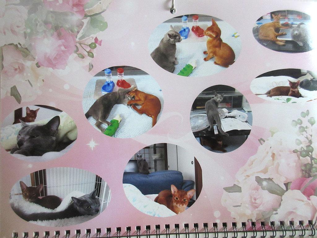 我が家の猫たちのカレンダー。