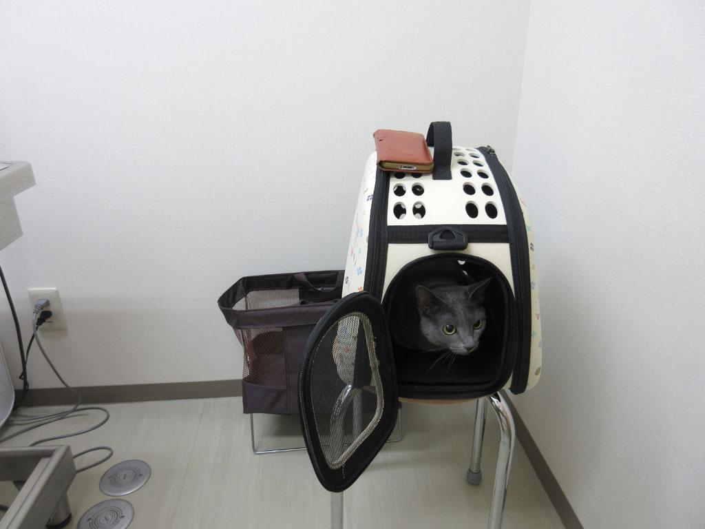 診察室のロシ子。