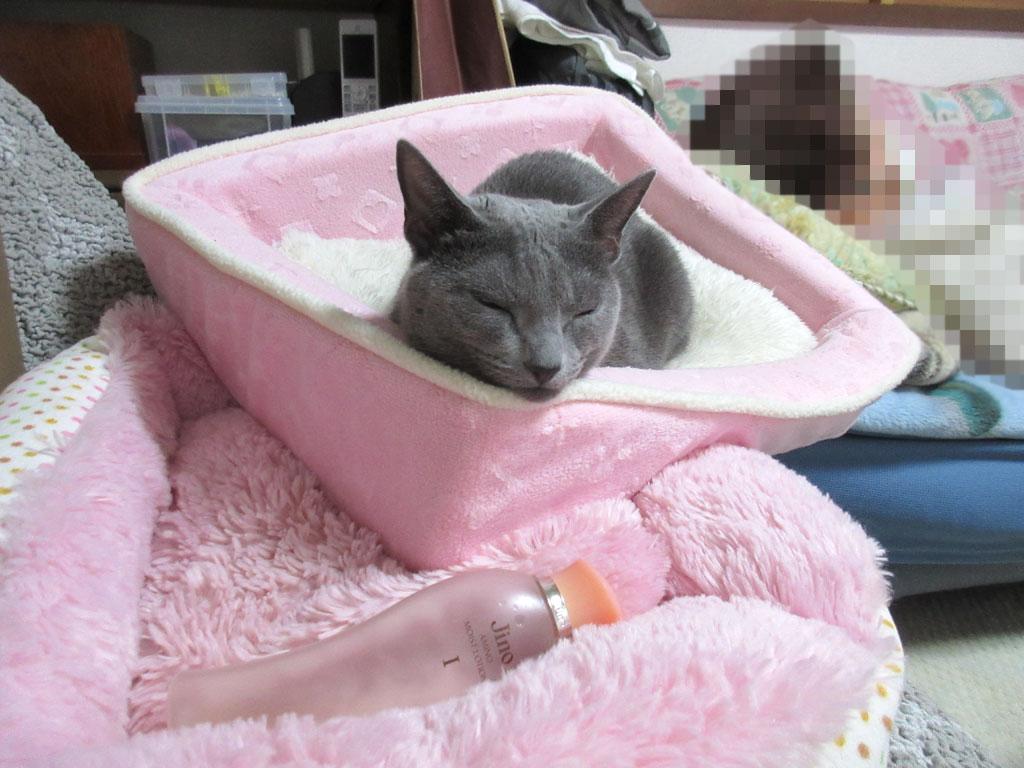 ロシ子のかわいい寝顔。