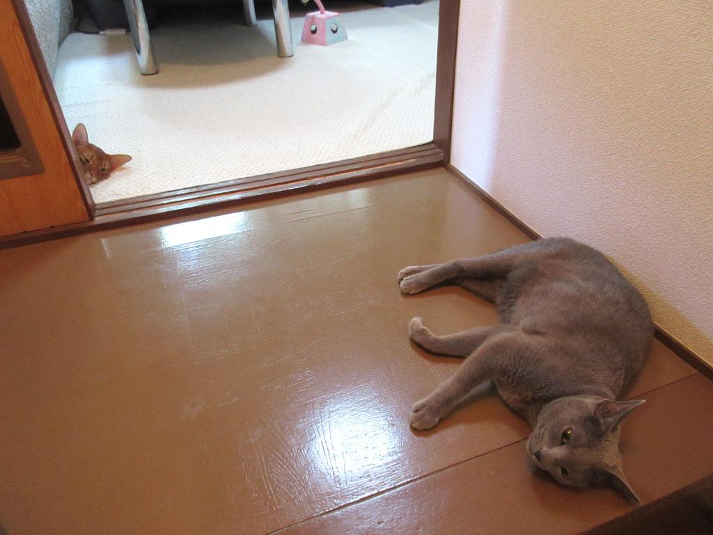 バテバテに見える猫たち。