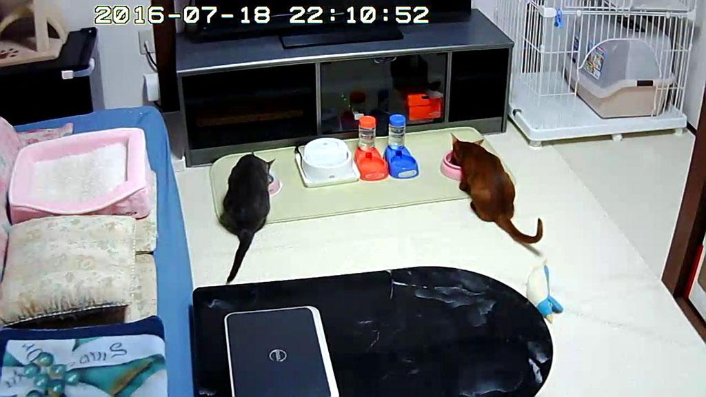 元気にご飯を食べている猫たち。